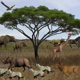 3D Serengeti Safari Screensaver